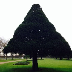 such a funny shape tree